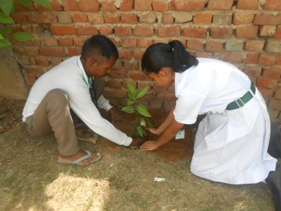 Plantation Drive in DPS Sector, 84